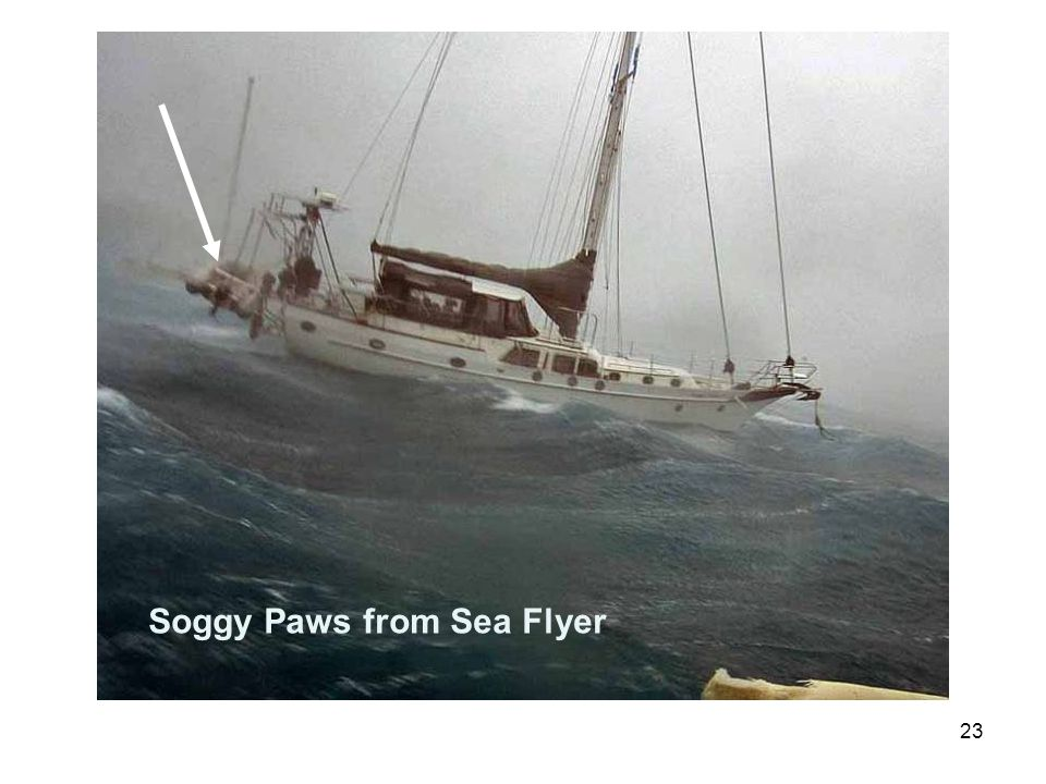 23 Soggy Paws from Sea Flyer