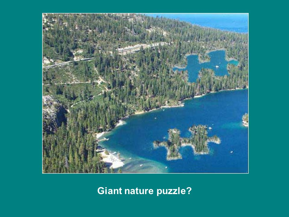 Giant nature puzzle?