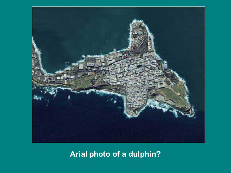 Arial photo of a dulphin