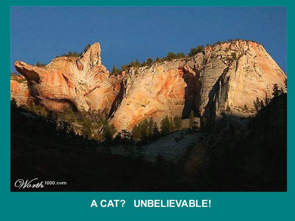 A CAT UNBELIEVABLE!