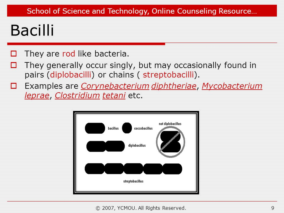 School of Science and Technology, Online Counseling Resource… S- layers of Cell Wall  S-layer crystalline proteins form the outermost cell envelope component of a broad spectrum of bacteria and archaea.