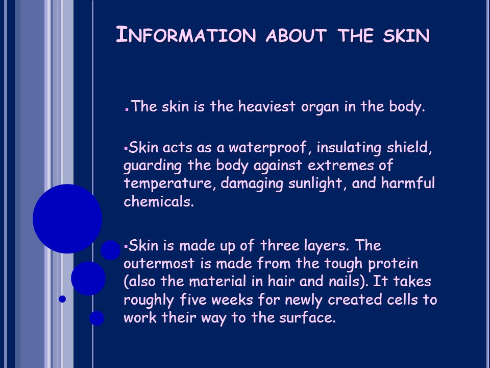 I NFORMATION ABOUT THE SKIN ▪ The skin is the heaviest organ in the body.