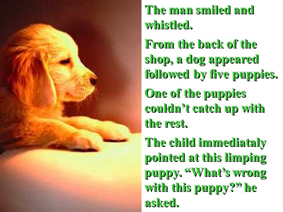 The man smiled and whistled. From the back of the shop, a dog appeared followed by five puppies.
