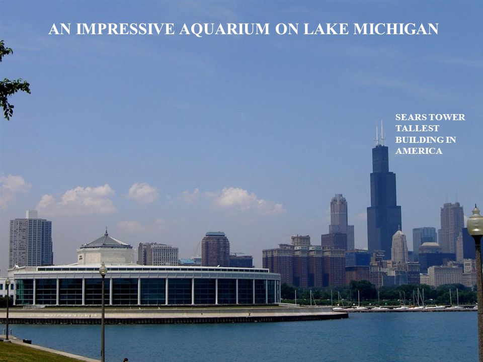 AN IMPRESSIVE AQUARIUM ON LAKE MICHIGAN SEARS TOWER TALLEST BUILDING IN AMERICA