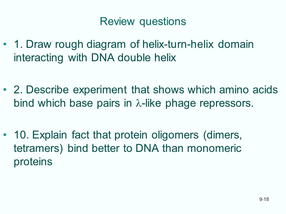 Review questions 1. Draw rough diagram of helix-turn-helix domain interacting with DNA double helix 2. Describe experiment that shows which amino acid