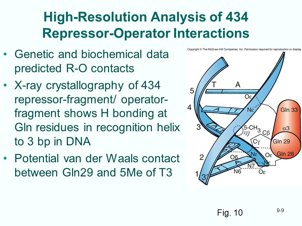 9-9 High-Resolution Analysis of 434 Repressor-Operator Interactions Genetic and biochemical data predicted R-O contacts X-ray crystallography of 434 repressor-fragment/ operator- fragment shows H bonding at Gln residues in recognition helix to 3 bp in DNA Potential van der Waals contact between Gln29 and 5Me of T3 Fig.