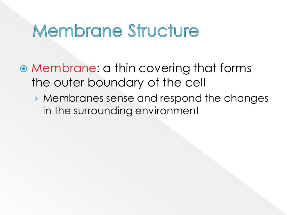  Membrane: a thin covering that forms the outer boundary of the cell › Membranes sense and respond the changes in the surrounding environment