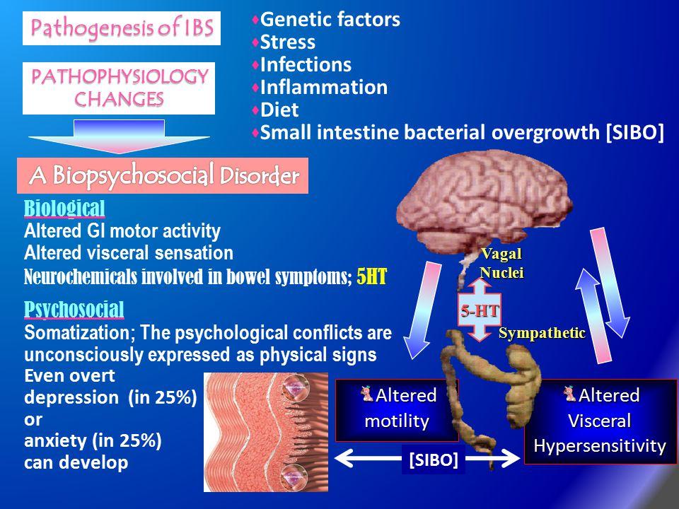 Altered motility Biological Altered GI motor activity Altered visceral sensation Neurochemicals involved in bowel symptoms; 5HT Psychosocial Somatizat