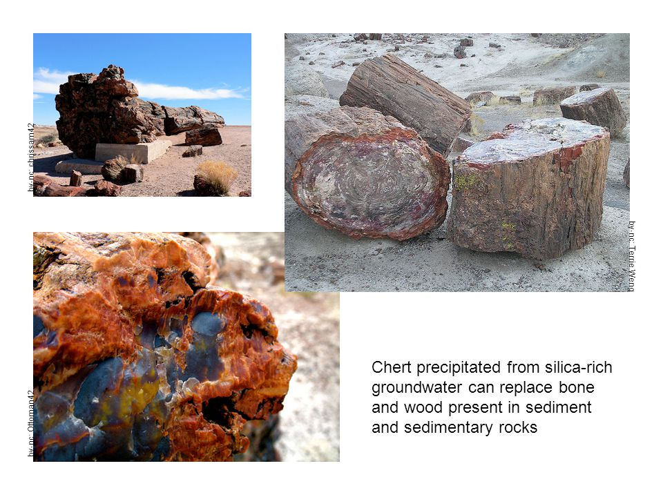 Chert precipitated from silica-rich groundwater can replace bone and wood present in sediment and sedimentary rocks by-nc: Terrie Weng by-nc: Ottoman4