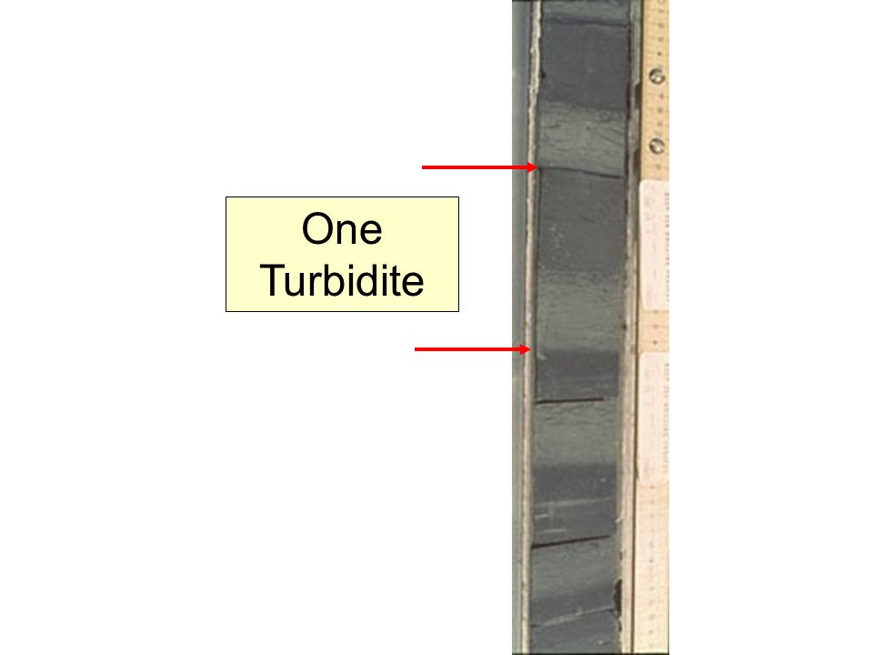 One Turbidite