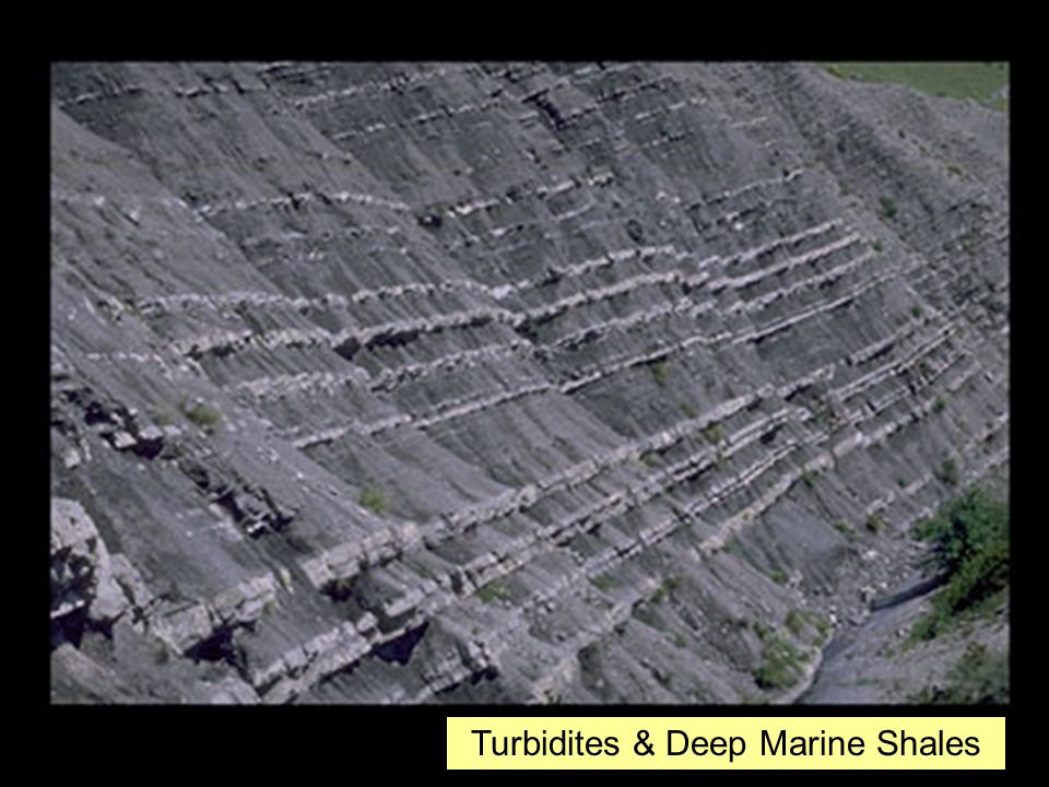 Turbidites & Deep Marine Shales