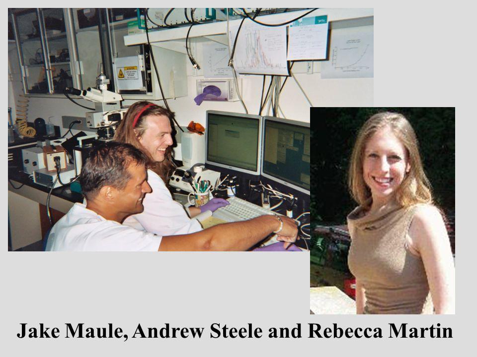 Jake Maule, Andrew Steele and Rebecca Martin