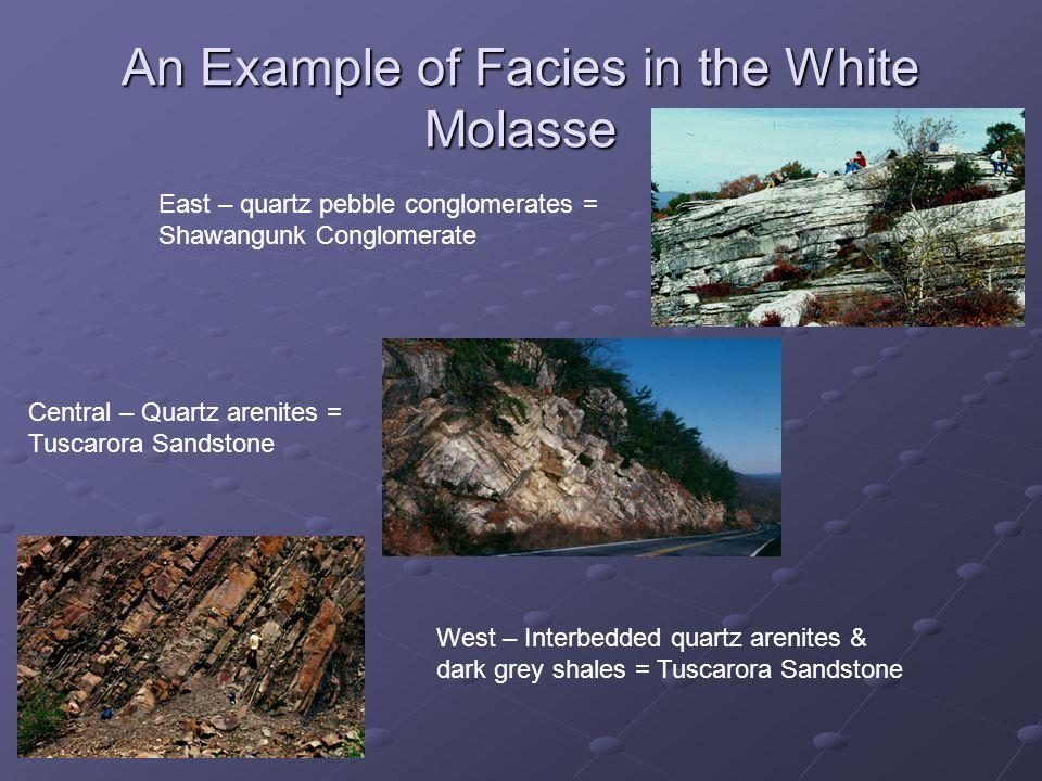 An Example of Facies in the White Molasse East – quartz pebble conglomerates = Shawangunk Conglomerate Central – Quartz arenites = Tuscarora Sandstone West – Interbedded quartz arenites & dark grey shales = Tuscarora Sandstone