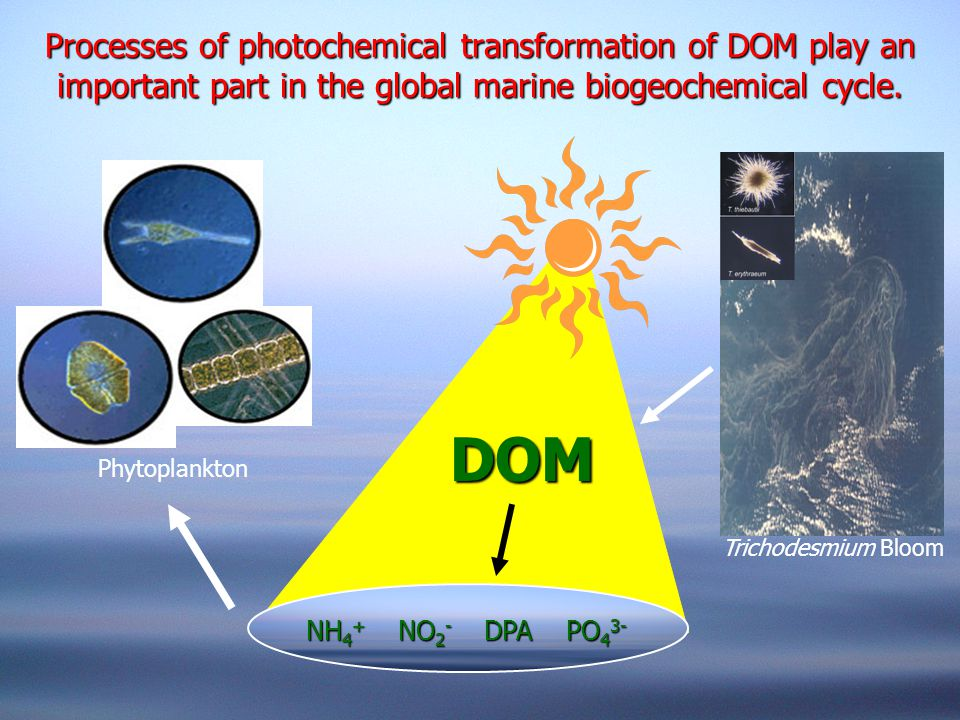 Processes of photochemical transformation of DOM play an important part in the global marine biogeochemical cycle. DOM Phytoplankton NH 4 + NO 2 - DPA
