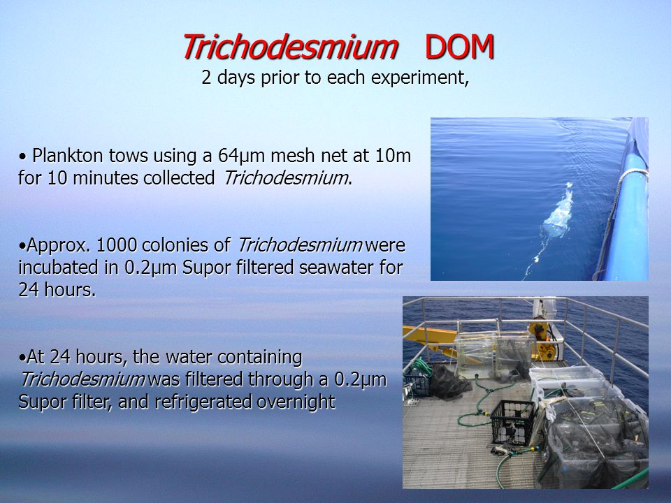 Trichodesmium DOM 2 days prior to each experiment, Plankton tows using a 64μm mesh net at 10m for 10 minutes collected Trichodesmium.