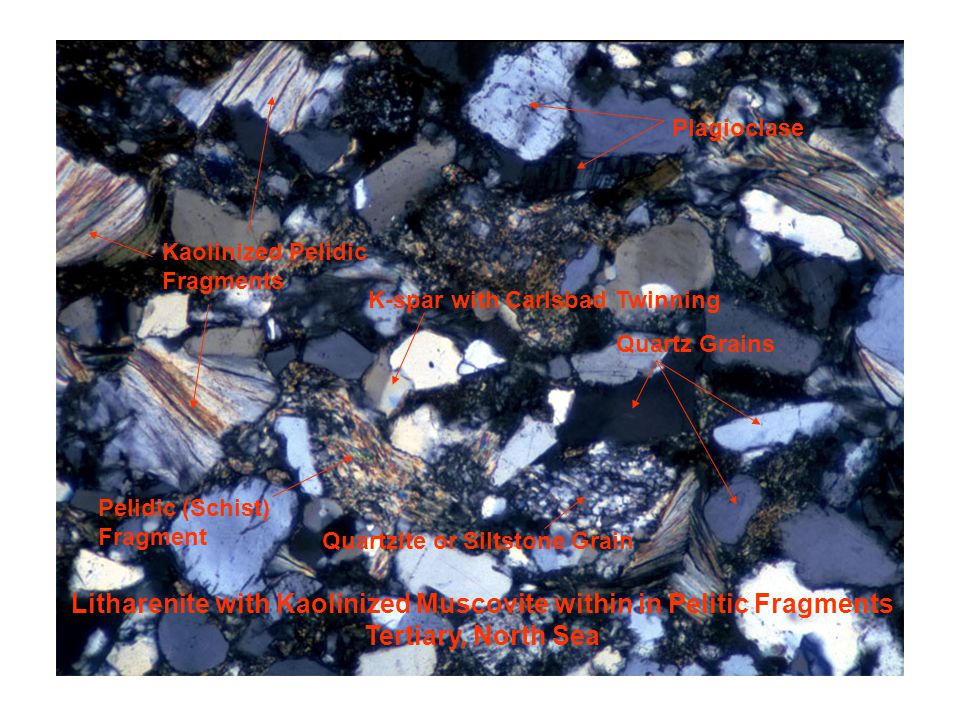 Litharenite with Kaolinized Muscovite within in Pelitic Fragments Tertiary, North Sea Kaolinized Pelidic Fragments Quartz Grains K-spar with Carlsbad Twinning Plagioclase Pelidic (Schist) Fragment Quartzite or Siltstone Grain