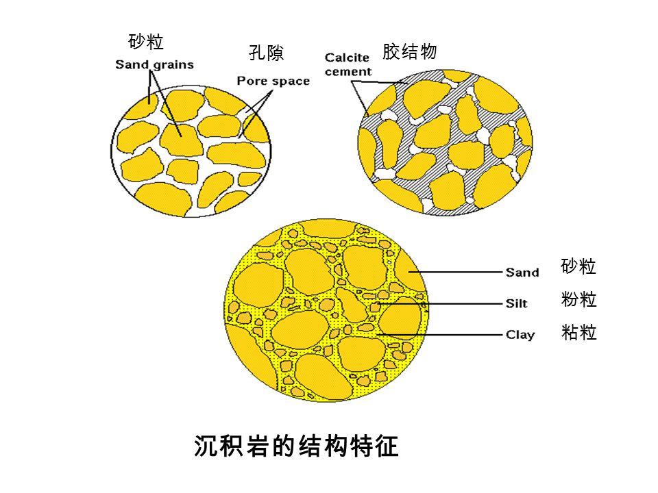 沉积岩的结构特征 砂粒 孔隙 胶结物 砂粒 粘粒 粉粒