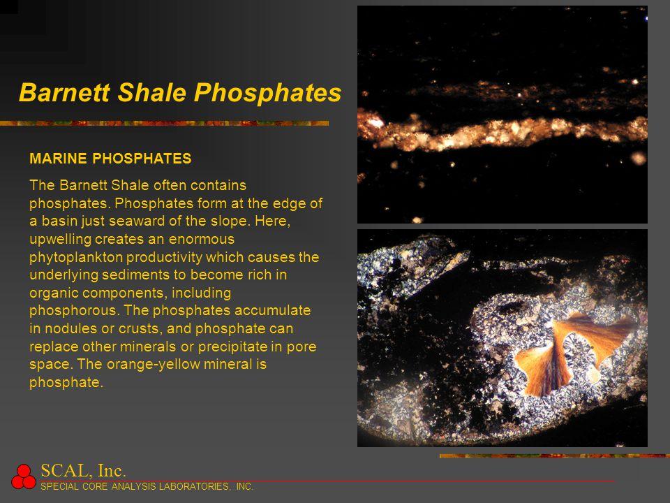 Barnett Shale Phosphates MARINE PHOSPHATES The Barnett Shale often contains phosphates.