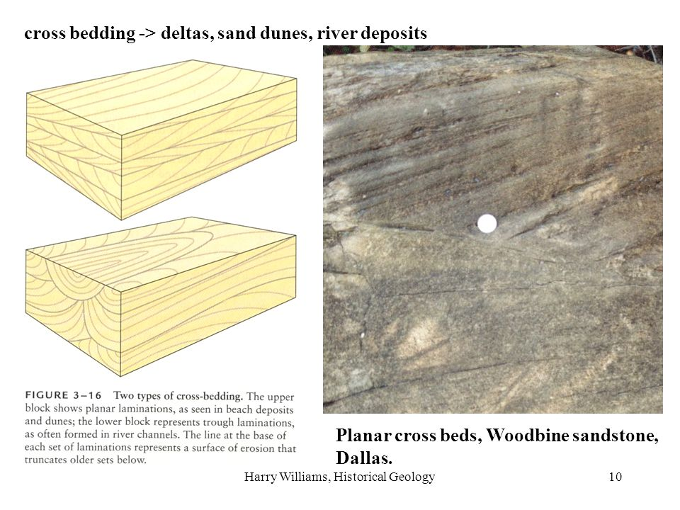 Harry Williams, Historical Geology10 cross bedding -> deltas, sand dunes, river deposits Planar cross beds, Woodbine sandstone, Dallas.
