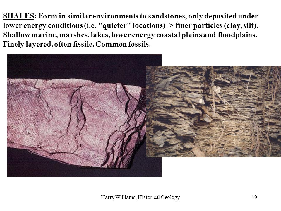 Harry Williams, Historical Geology19 SHALES: Form in similar environments to sandstones, only deposited under lower energy conditions (i.e.