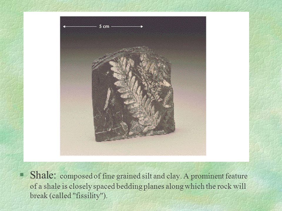 §Shale: composed of fine grained silt and clay. A prominent feature of a shale is closely spaced bedding planes along which the rock will break (calle