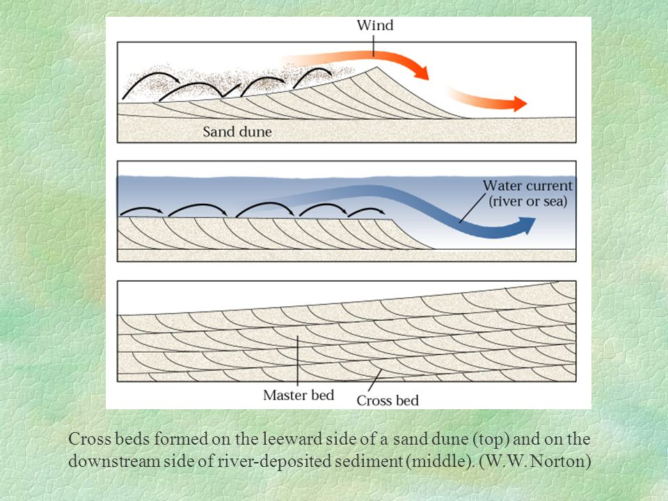 Cross beds formed on the leeward side of a sand dune (top) and on the downstream side of river-deposited sediment (middle). (W.W. Norton)