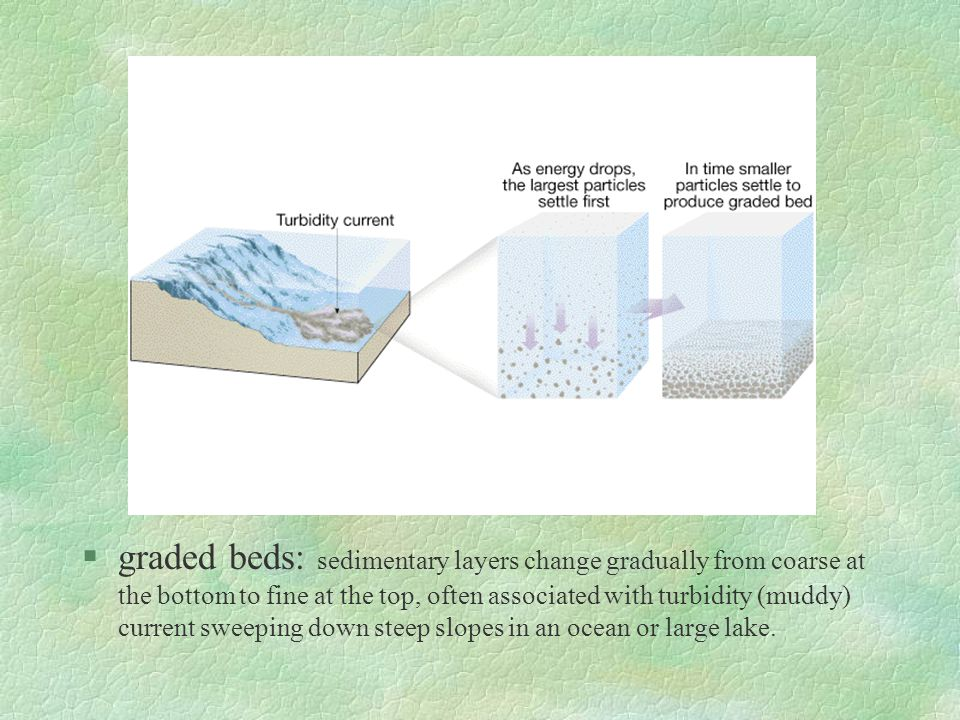 §graded beds: sedimentary layers change gradually from coarse at the bottom to fine at the top, often associated with turbidity (muddy) current sweepi