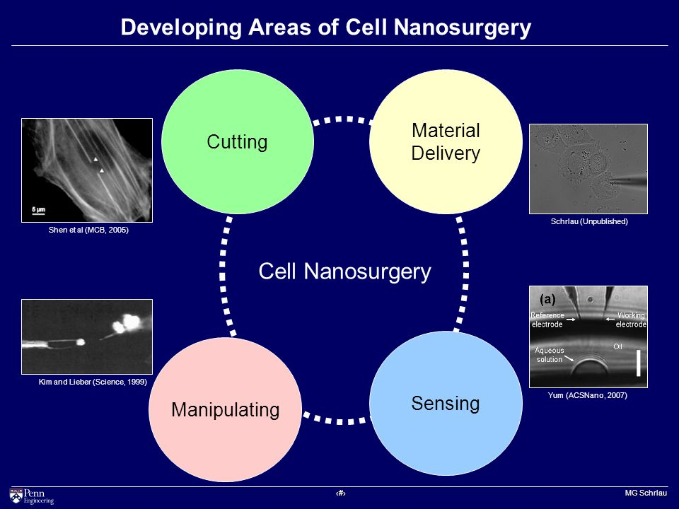 ‹#› MG Schrlau Developing Areas of Cell Nanosurgery Shen et al (MCB, 2005) Kim and Lieber (Science, 1999) Yum (ACSNano, 2007) Cell Nanosurgery Cutting Material Delivery Manipulating Sensing Schrlau (Unpublished)