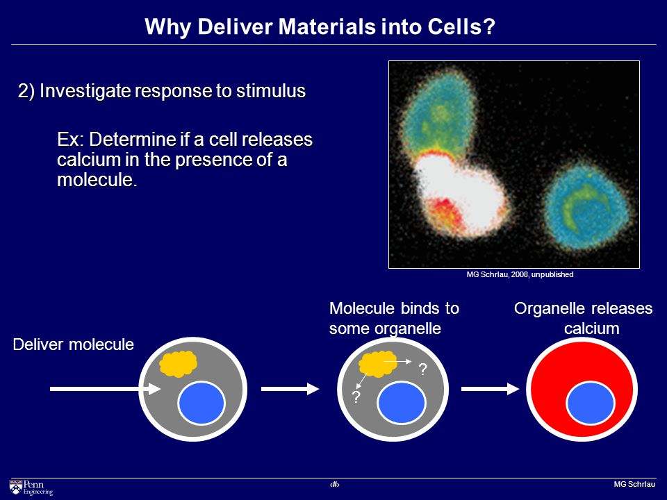 ‹#› MG Schrlau Why Deliver Materials into Cells.