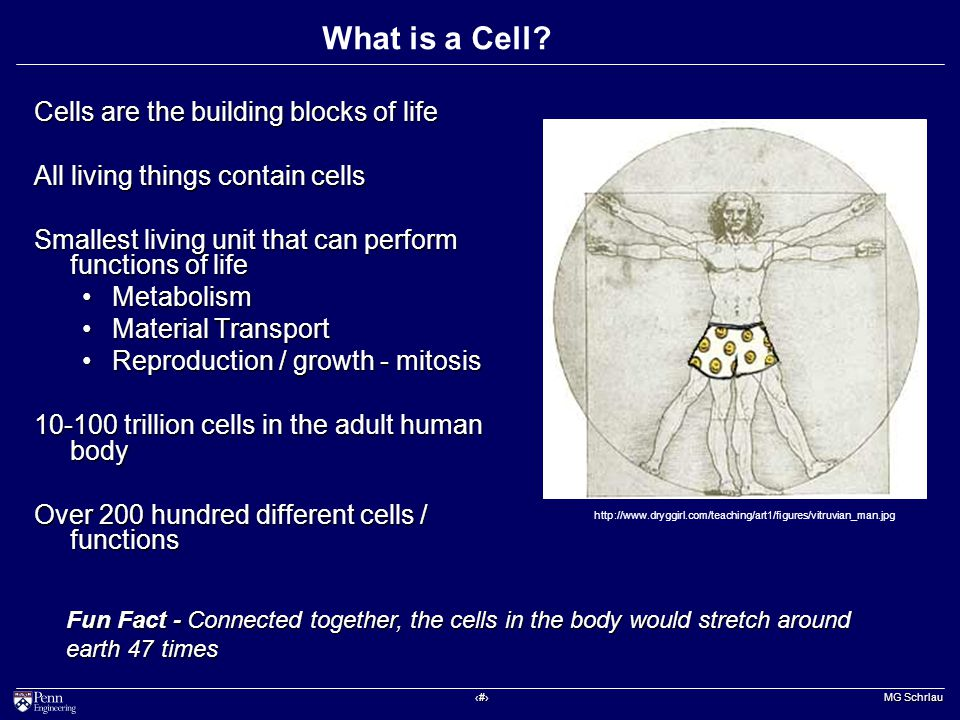 ‹#› MG Schrlau What is a Cell.