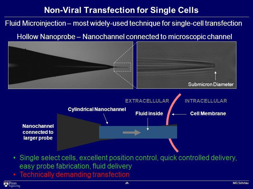 ‹#› MG Schrlau Hollow Nanoprobe – Nanochannel connected to microscopic channel Submicron Diameter Non-Viral Transfection for Single Cells Fluid Microinjection – most widely-used technique for single-cell transfection Cylindrical Nanochannel Fluid insideCell Membrane INTRACELLULAREXTRACELLULAR Nanochannel connected to larger probe Single select cells, excellent position control, quick controlled delivery, easy probe fabrication, fluid delivery Technically demanding transfection