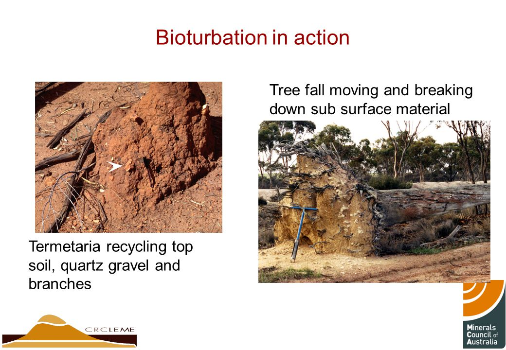 Bioturbation in action Termetaria recycling top soil, quartz gravel and branches Tree fall moving and breaking down sub surface material