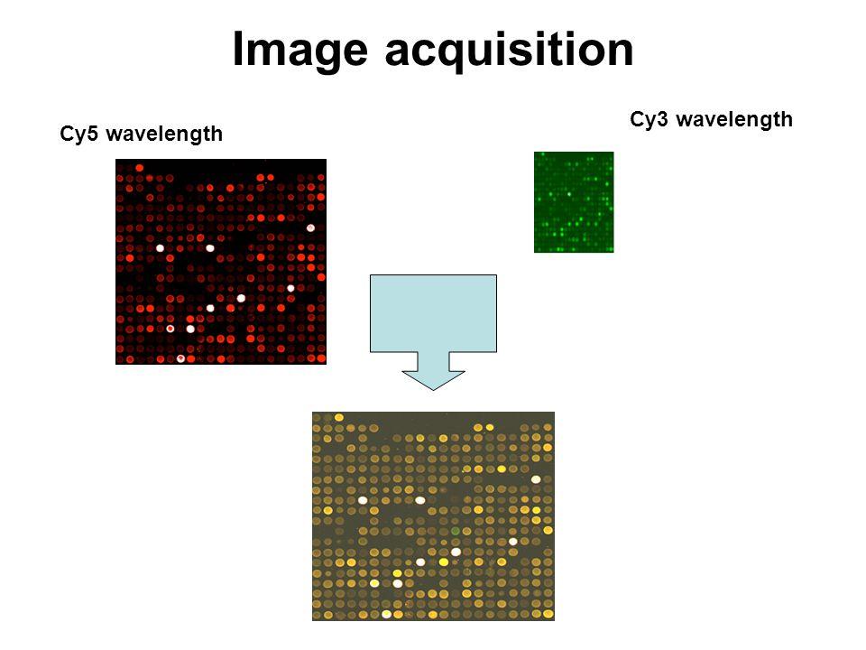 Image acquisition Cy5 wavelength Cy3 wavelength