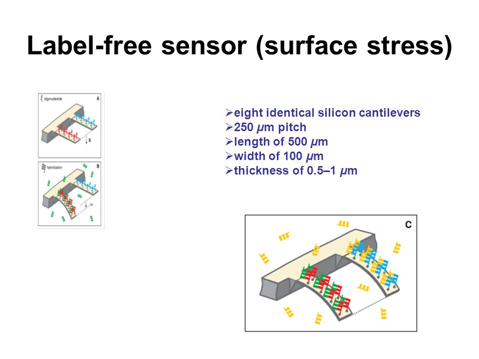 Label-free sensor (surface stress)  eight identical silicon cantilevers  250 µm pitch  length of 500 µm  width of 100 µm  thickness of 0.5–1 µm