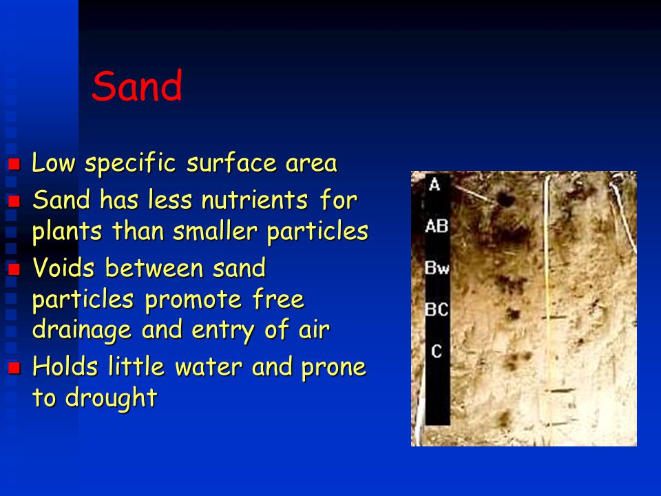 Sand n Low specific surface area n Sand has less nutrients for plants than smaller particles n Voids between sand particles promote free drainage and