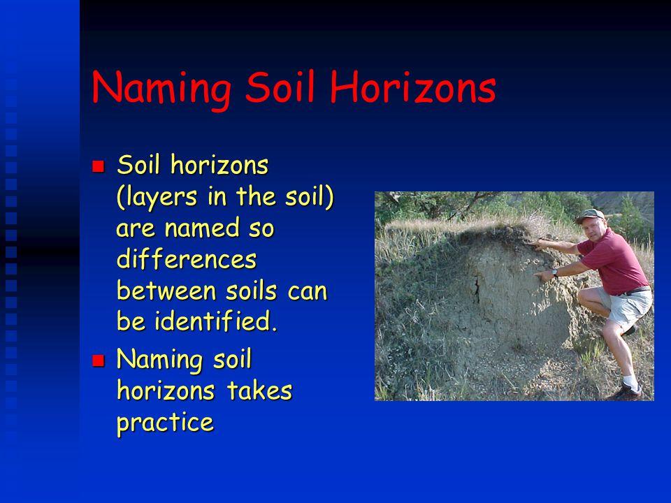 Naming Soil Horizons n Soil horizons (layers in the soil) are named so differences between soils can be identified. n Naming soil horizons takes pract