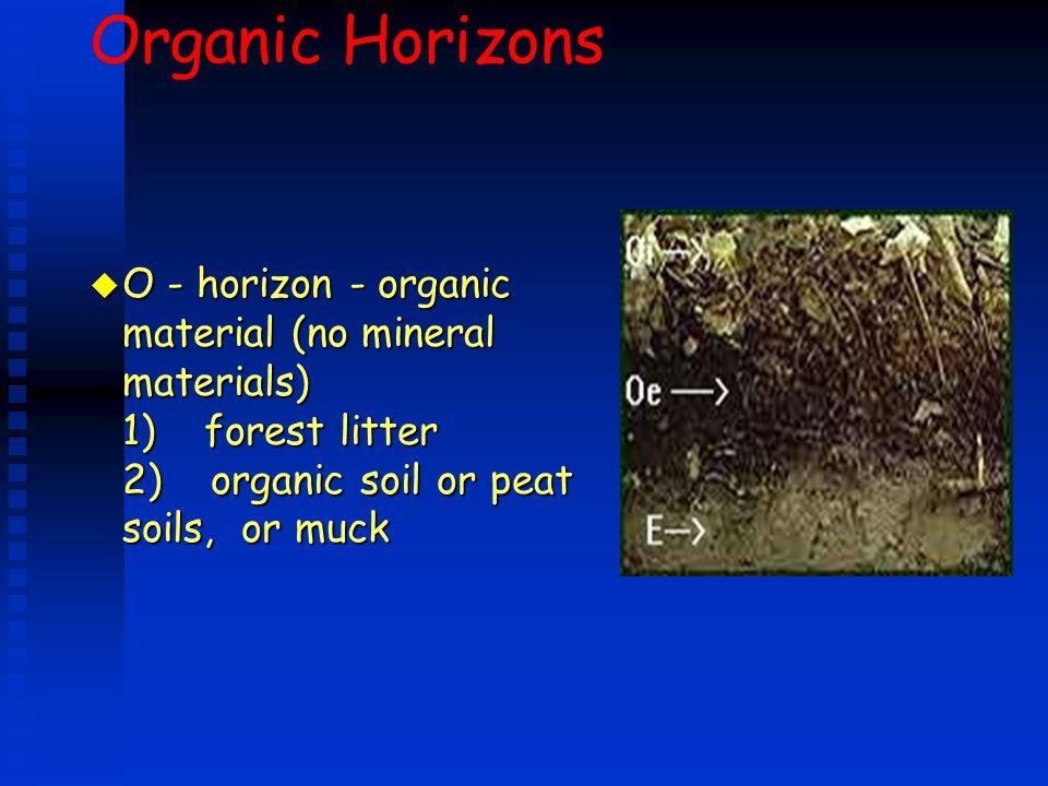 Organic Horizons u O - horizon - organic material (no mineral materials) 1) forest litter 2) organic soil or peat soils, or muck