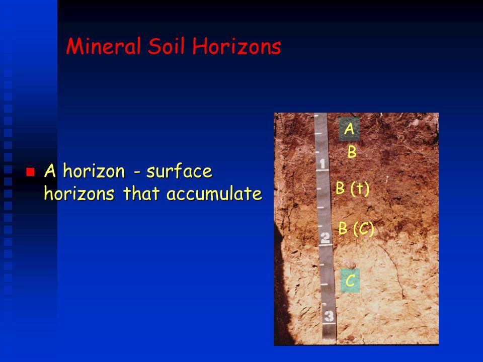 Mineral Soil Horizons n A horizon - surface horizons that accumulate A B B (t) B (C) C