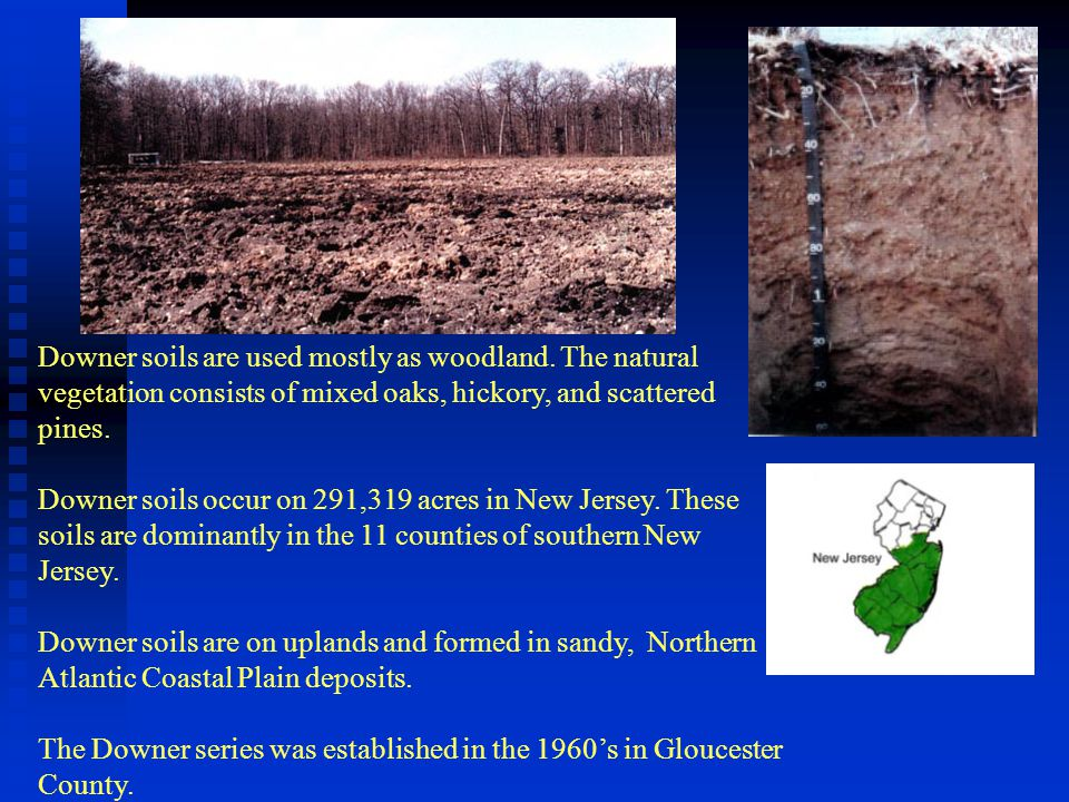 Downer soils are used mostly as woodland. The natural vegetation consists of mixed oaks, hickory, and scattered pines. Downer soils occur on 291,319 a