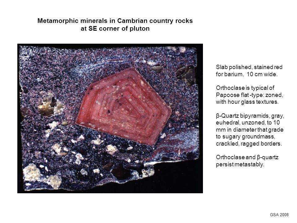 Metamorphic minerals in Cambrian country rocks at SE corner of pluton Slab polished, stained red for barium, 10 cm wide.