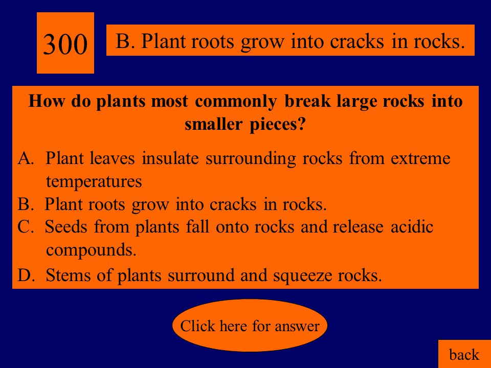 200 back Click here for answer C. Organisms can be preserved in sedimentary rock. Why are most fossils found in sedimentary rocks? A. Sedimentary rock