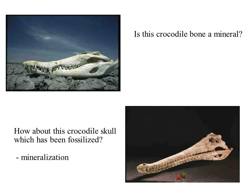 © 2008, John Wiley and Sons, Inc. Is this crocodile bone a mineral? How about this crocodile skull which has been fossilized? - mineralization