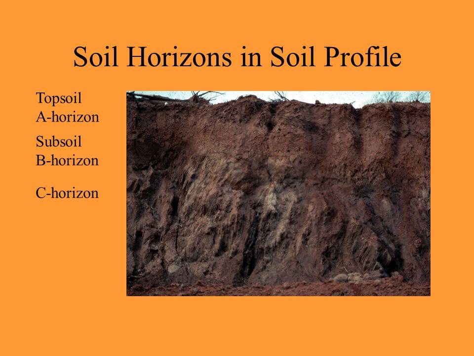 Soil Horizons in Soil Profile Topsoil A-horizon Subsoil B-horizon C-horizon