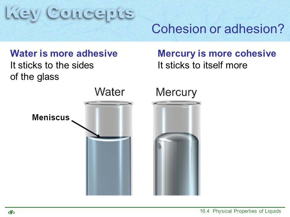 13 16.4 Physical Properties of Liquids Cohesion or adhesion? Water is more adhesive It sticks to the sides of the glass Mercury is more cohesive It st