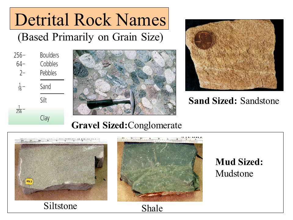 Detrital Rock Names (Based Primarily on Grain Size) Sand Sized: Sandstone Gravel Sized:Conglomerate Siltstone Shale Mud Sized: Mudstone