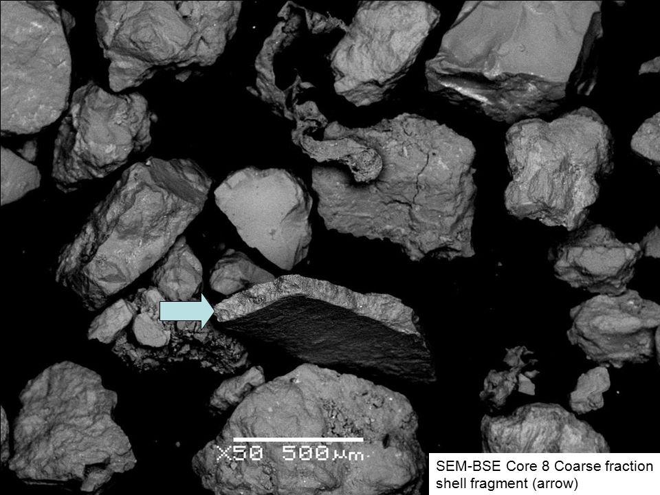 SEM-BSE Core 8 Coarse fraction shell fragment (arrow)