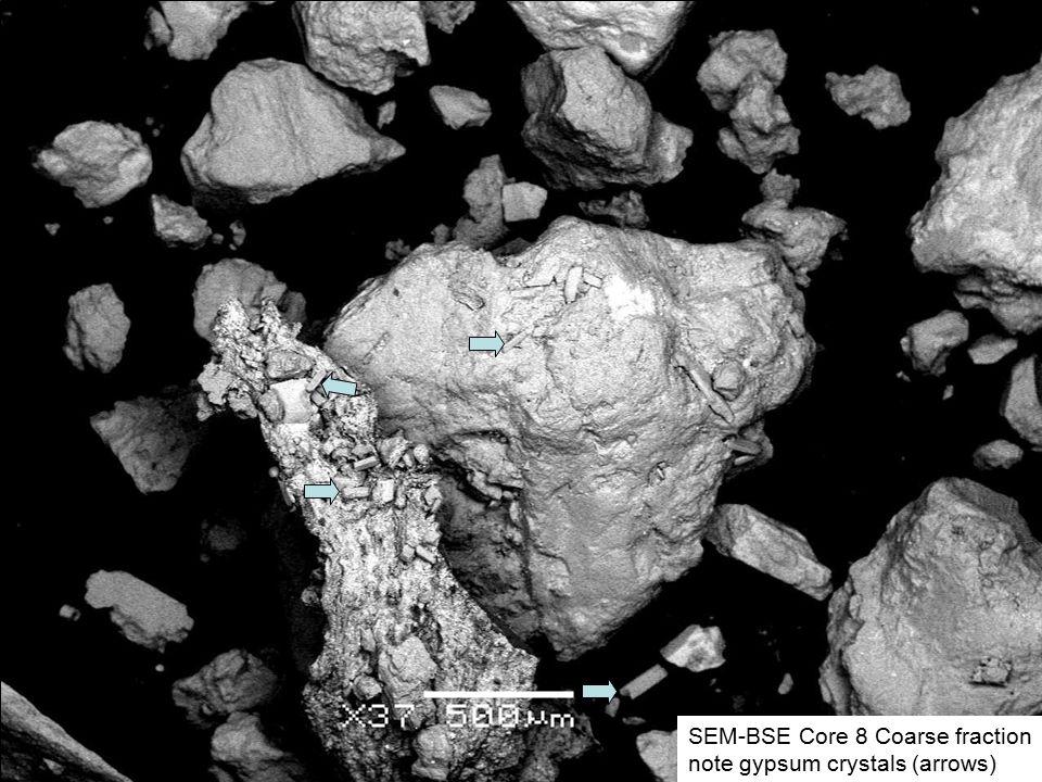 SEM-BSE Core 8 Coarse fraction note gypsum crystals (arrows)