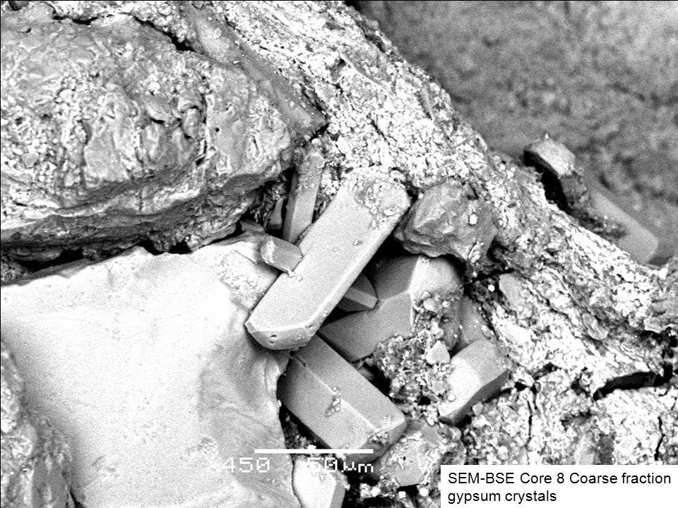 SEM-BSE Core 8 Coarse fraction gypsum crystals