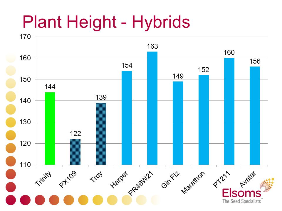 Plant Height - Hybrids 10