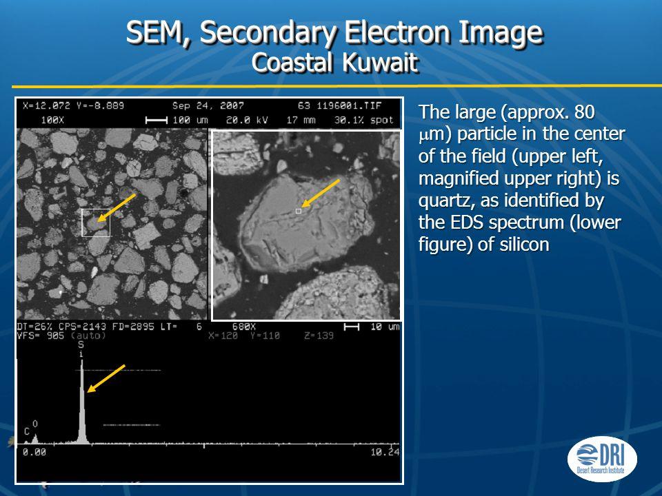 SEM, Secondary Electron Image Coastal Kuwait The large (approx.